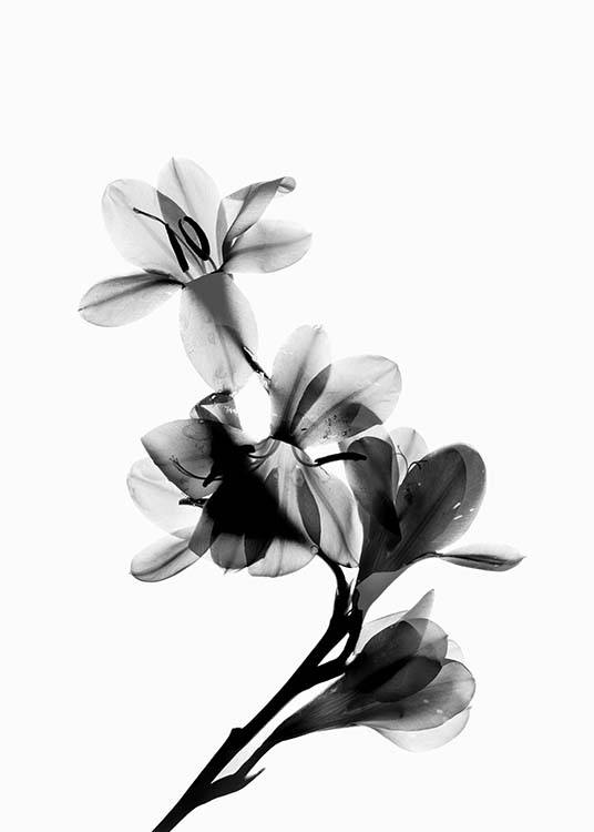 Scanned Flower Poster / Black & white at Desenio AB (10425)