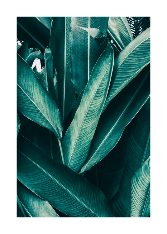 Tropical Leaves No1 Poster / Photographs at Desenio AB (10439)