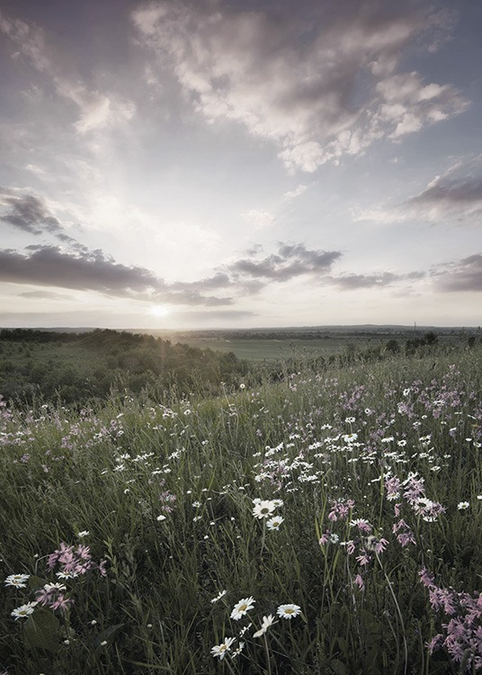 Meadow Sunset Poster / Nature at Desenio AB (10918)