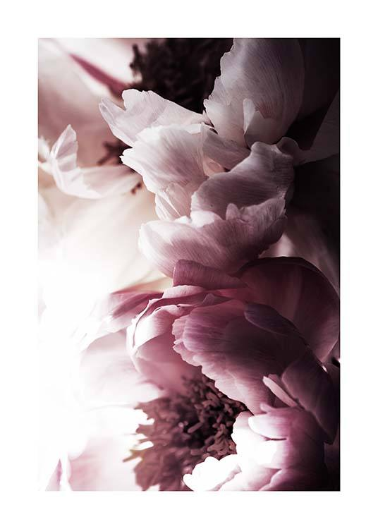 Dreamy Peony No2 Poster / Photographs at Desenio AB (11776)