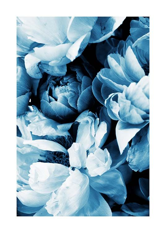 Blue Peony No2 Poster / Photographs at Desenio AB (11779)