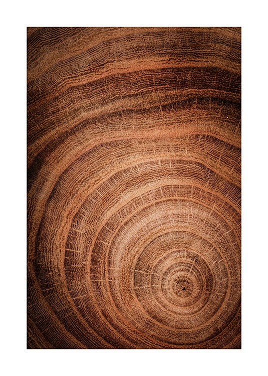 Growth Rings Poster / Nature at Desenio AB (11873)