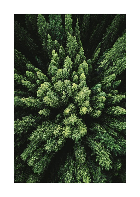 Aerial Forest Poster / Nature at Desenio AB (12083)