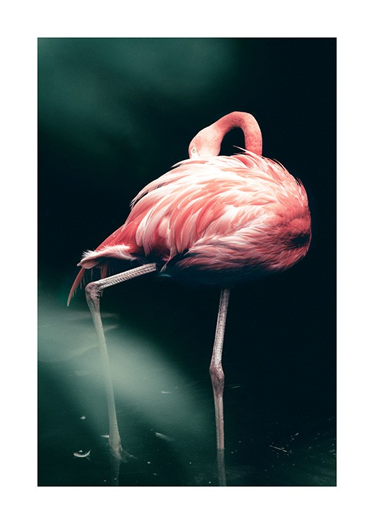 Wild Flamingo Poster / Photographs at Desenio AB (12566)