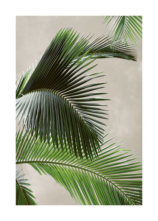 Tropical Palm Poster / Photographs at Desenio AB (12570)