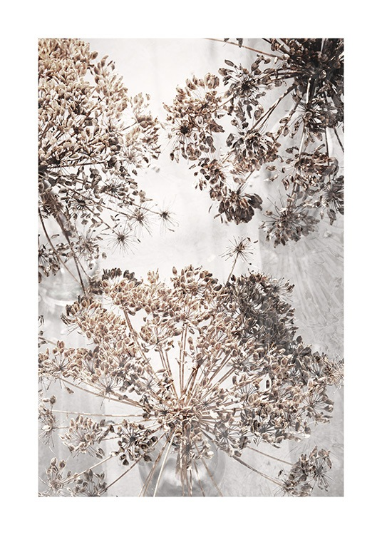 Dried Giant Hogweed No2 Poster / Photographs at Desenio AB (12664)