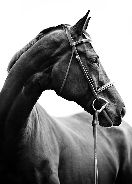 Black and white photograph with portrait of horse from side