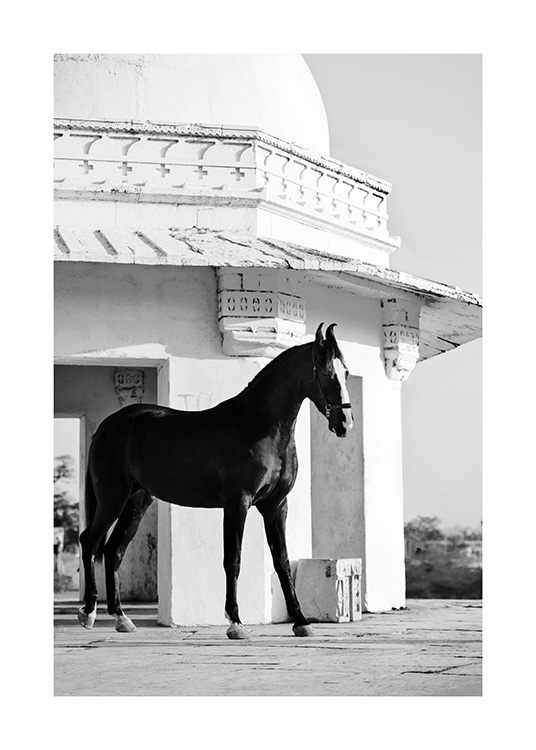 Photograph of black horse in front of old building in black and white