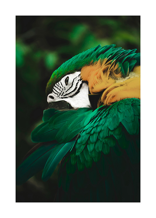 Animal print with green and yellow parrot in the jungle
