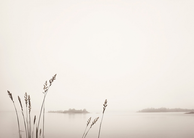 - Photograph of reeds by a foggy lake in beige, with small forests in the background