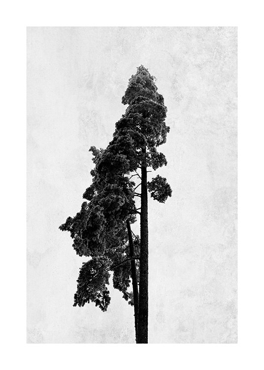 - Photo art in black and white with a pine tree on a grey concrete background