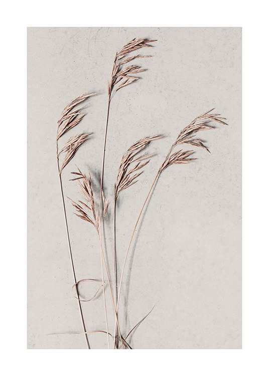 - Botanical photograph with dried grass in beige on a beige background