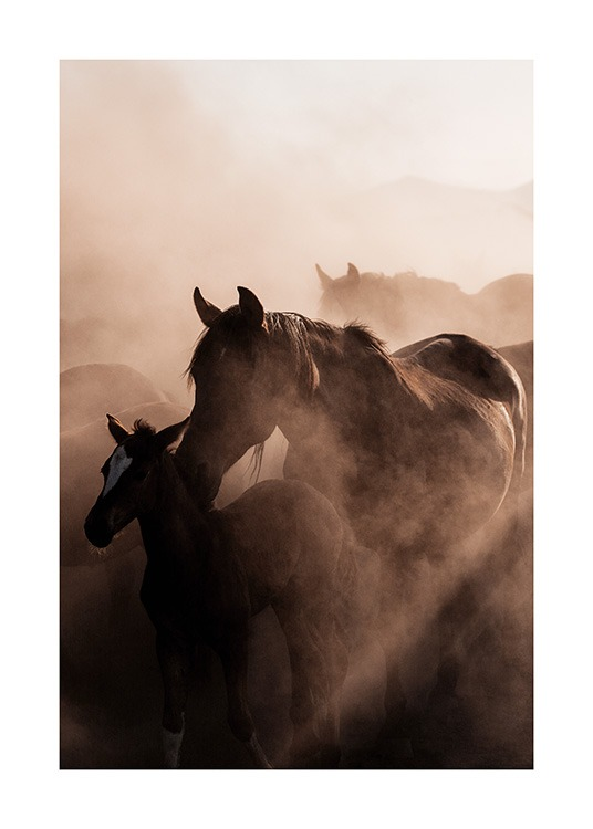 - Animal print with a photograph of a herd of wild horses, and a foal with its mother at the front