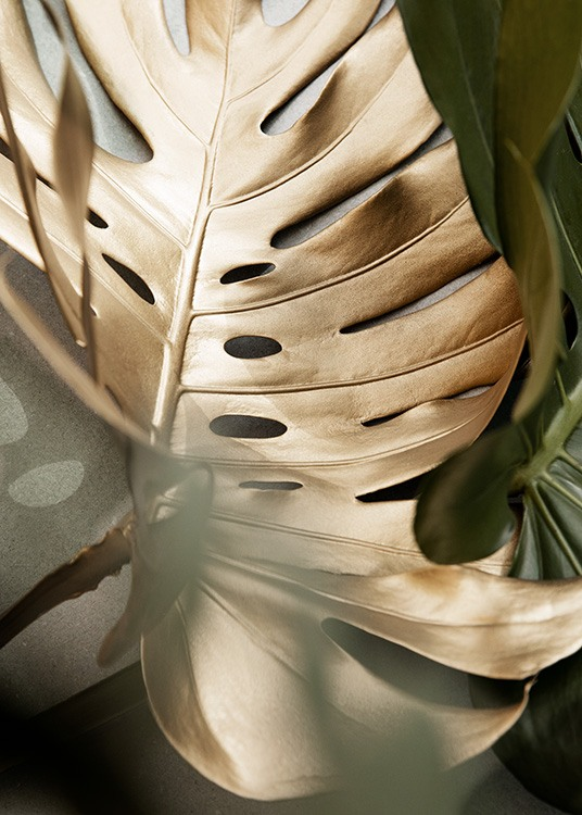- Close up photograph of a monstera leaf in gold