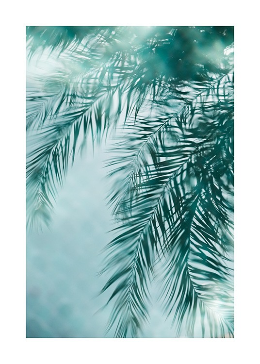 - Photograph of palm leaves reflecting in a blue pool
