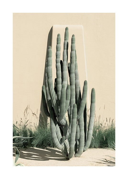 – Photograph of tall cacti in front of a beige wall with high grass at the bottom
