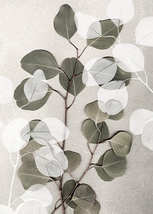 – Photograph of white and green eucalyptus branches laying on a stone background in beige