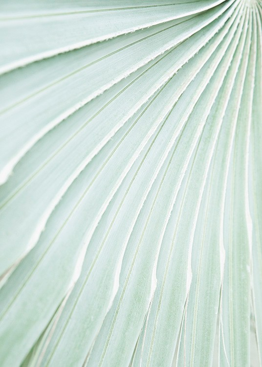 – Photograph with close up of a mint green leaf with pleats in the leaf