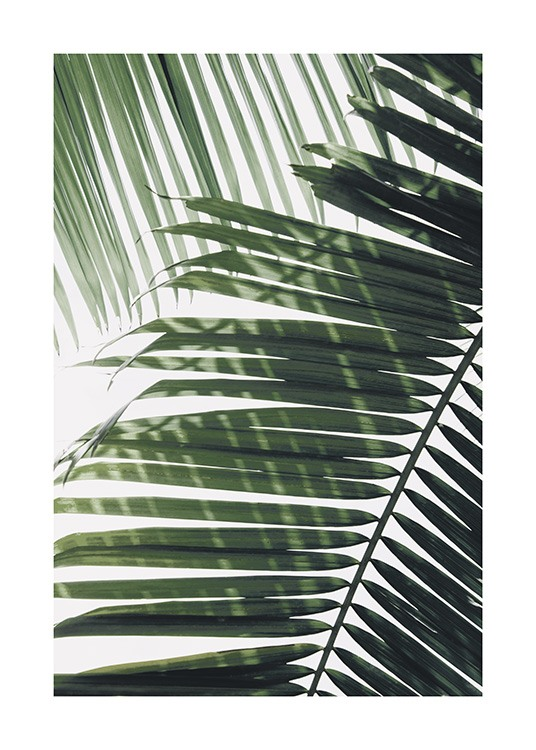 – Photograph of a green palm leaf with another leaf in the background