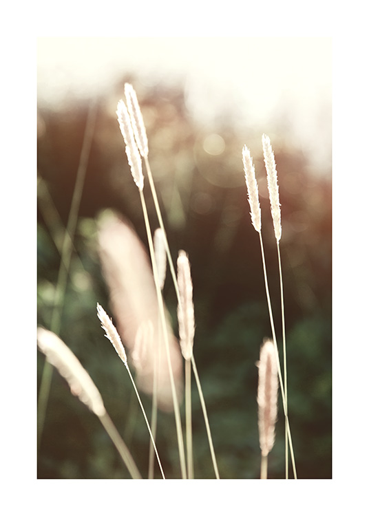 – Photograph of a bunch of grass in the sunlight, with a dark green, blurry background