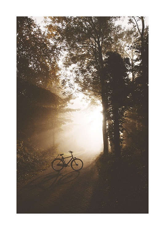 – Photograph of a forest with a bike standing on a road in the middle with sunlight shining on it
