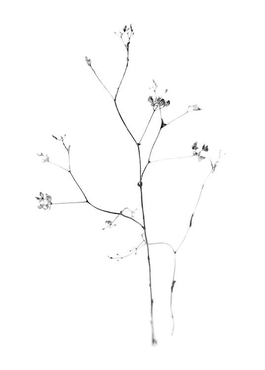 – Black and white photograph of small flowers on a thin branch, on a white background