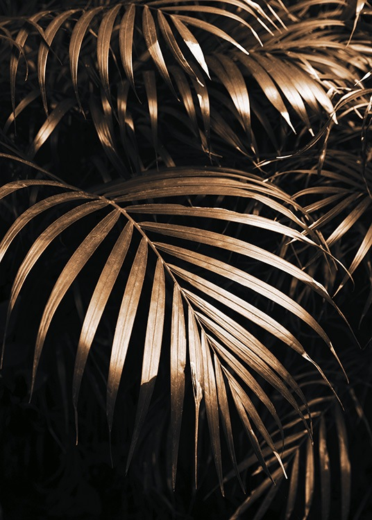– Photograph of golden palm leaves against a black background