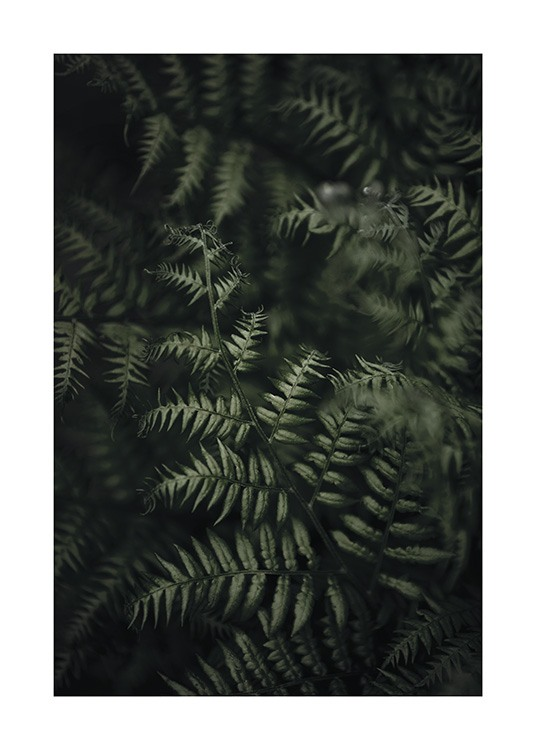 – Photograph with close up of a bundle of dark green ferns