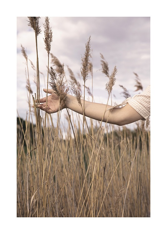 – Photograph of an arm stretching out in between brown reeds