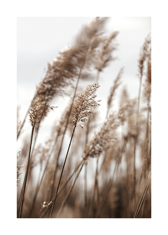 – Photograph of reeds in beige, leaning to the side in the wind