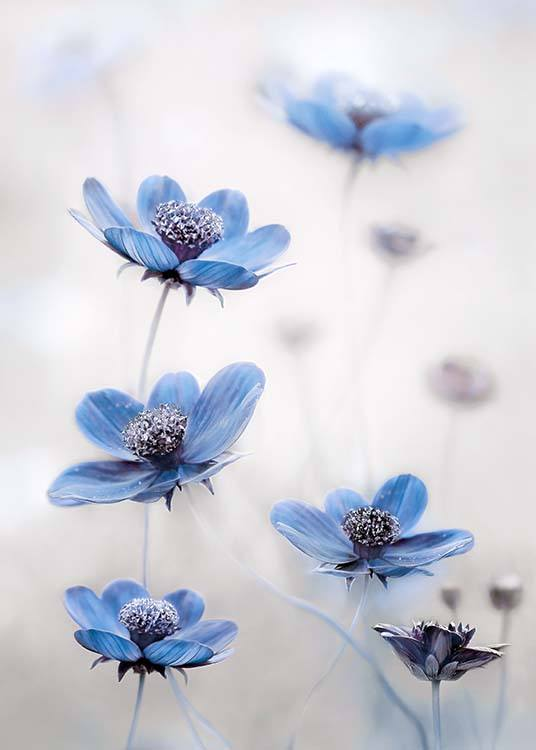 Cosmos Blue Poster / Photographs at Desenio AB (2536)