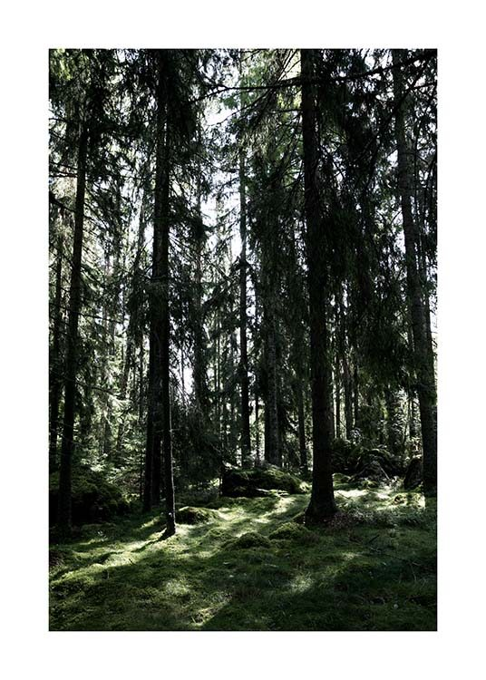 Forest Trees Poster / Nature at Desenio AB (2745)