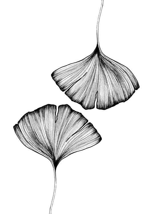 Ginkgo Leaves Poster / Black & white at Desenio AB (3600)