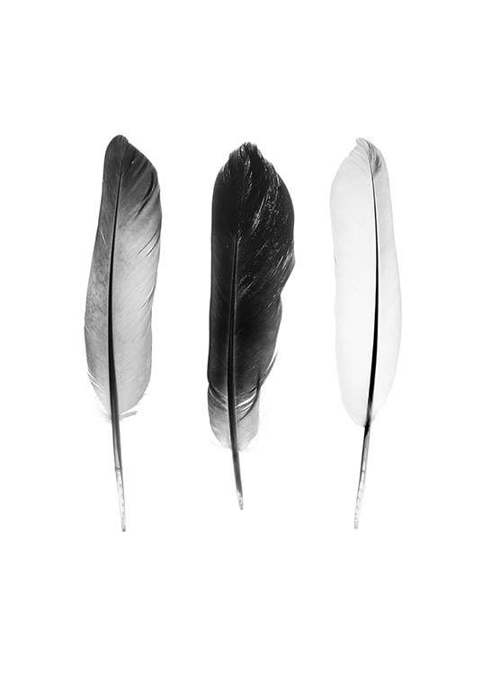 Black And White Feathers Poster / Black & white at Desenio AB (3634)