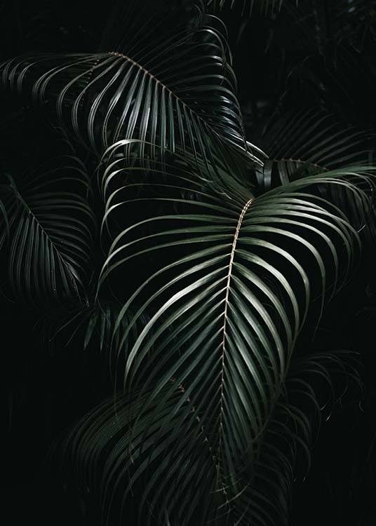Dark Green Palm Leaves No1 Poster / Photographs at Desenio AB (3772)