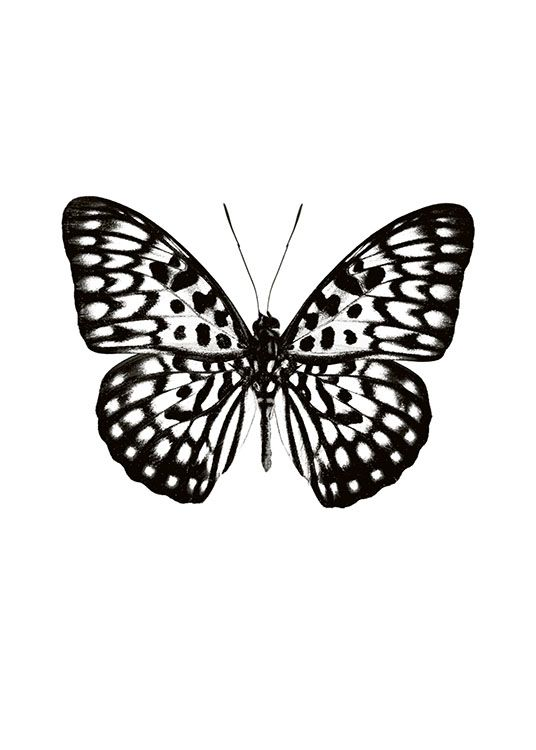 Butterfly Black And White, Poster / Animals at Desenio AB (7591)