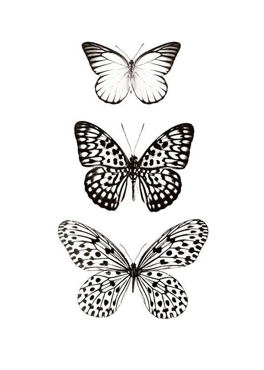 Three Butterflies, Posters / Animals at Desenio AB (7978)