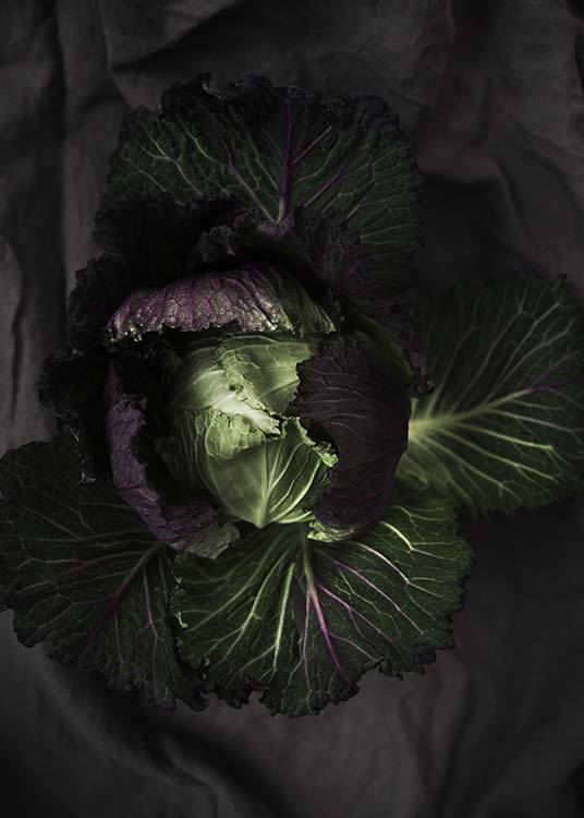 Cabbage Poster / Photographs at Desenio AB (8847)